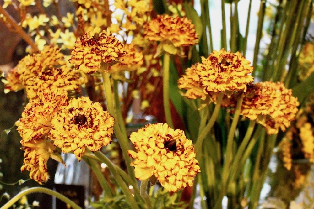 独特な花芯やフォルムが魅力の「ラナンキュラス モロッコシリーズ」