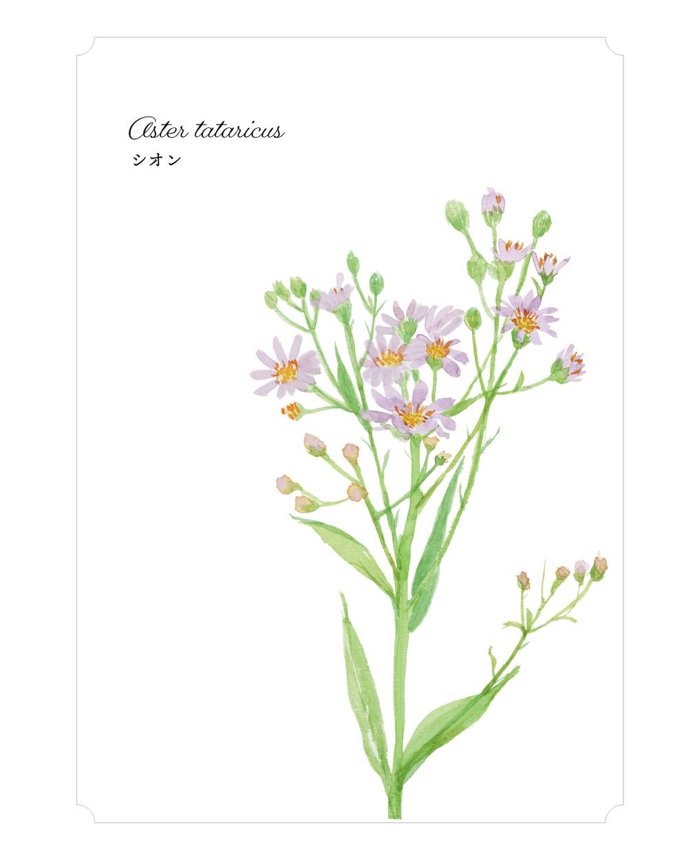 365日の花と 花言葉 Oct Week01 9月29日 10月5日分 植物生活