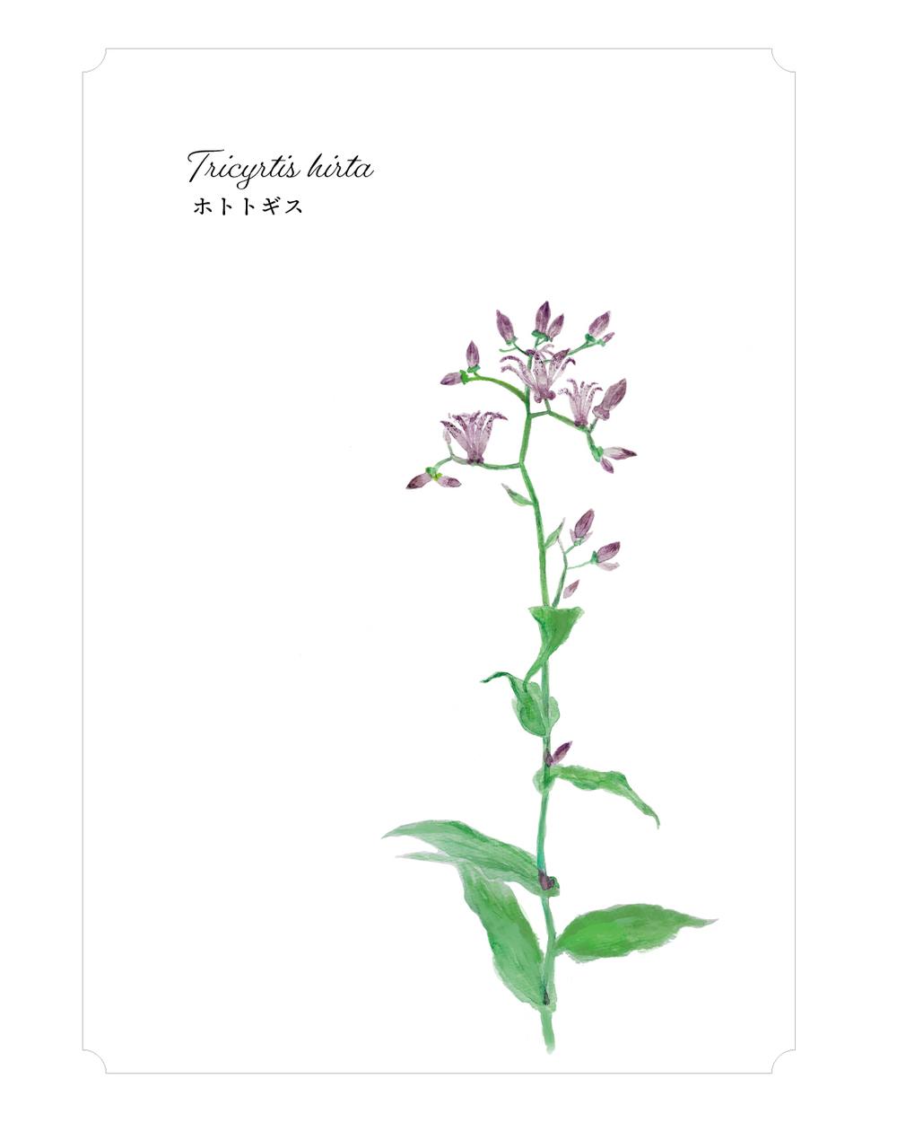 365日の花と 花言葉 Oct Week02 10月6日 12日分 植物生活