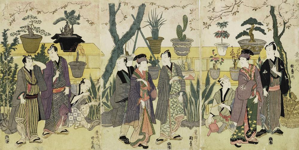「Edo plant hunter」の画像検索結果